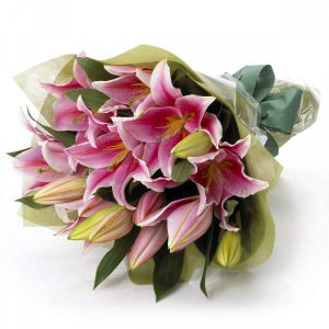 Oriental Lilly